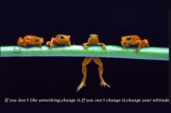 change quote frogs coach4success