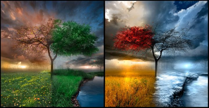 changing trees through the seasons